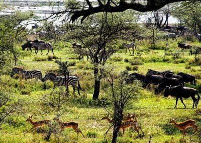 Terug op Safari